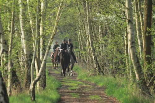 Reiter im Wald